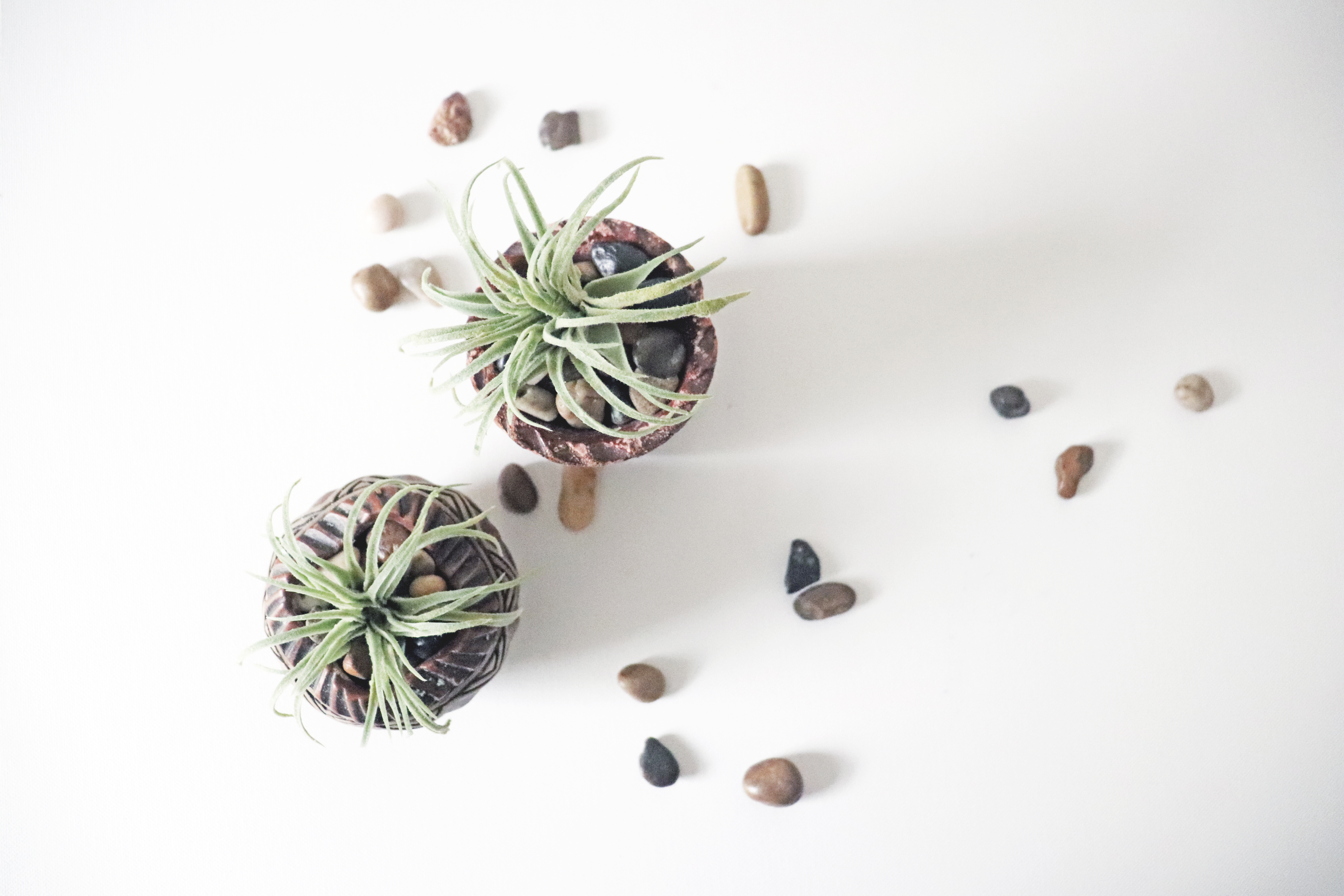 Air plant in a pot with natural rocks on a white background
