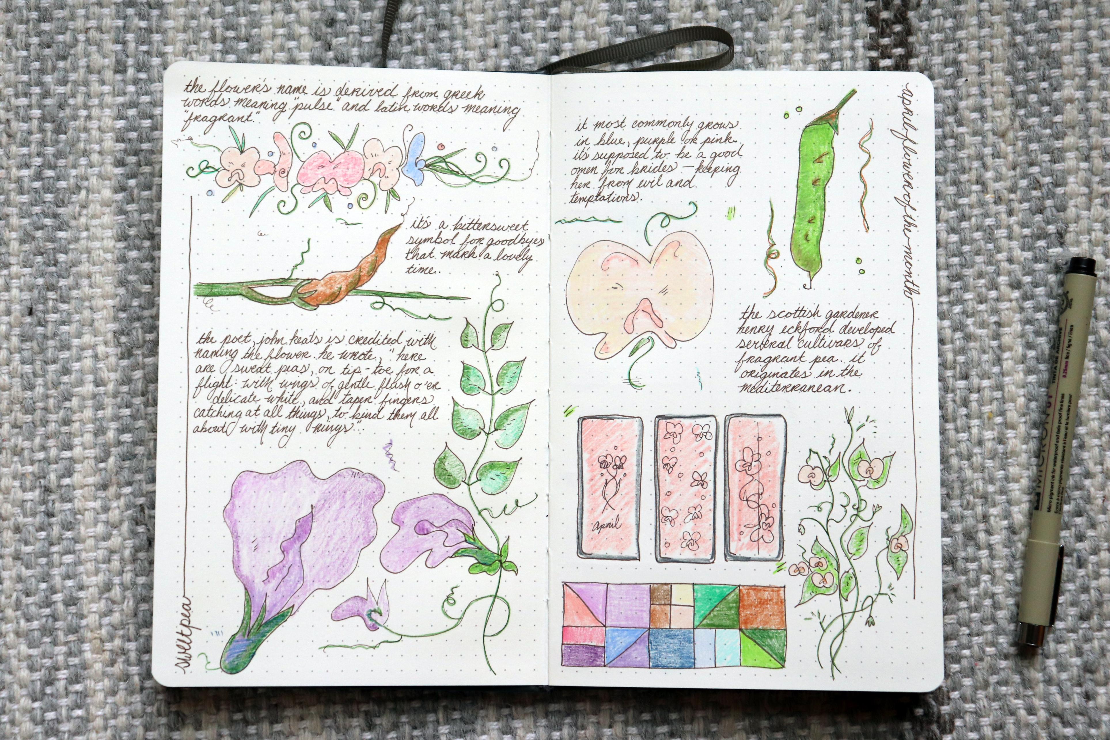 sweet pea flower bullet journal
