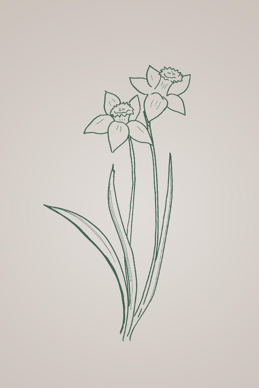 daffodil wallpaper flower